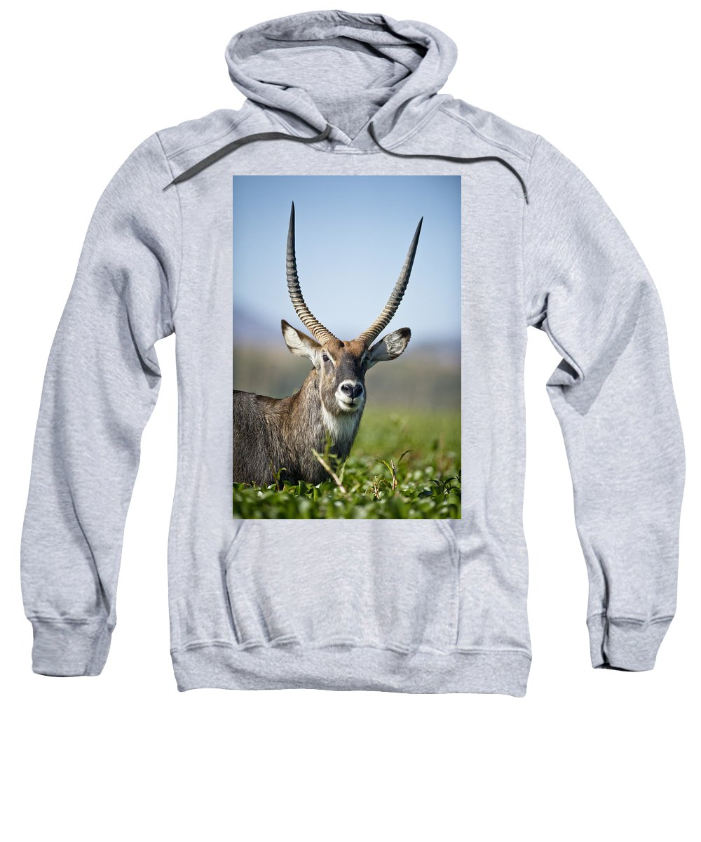 African Wildlife Sweatshirt featuring the photograph An Antelope Standing Amongst Tall by David DuChemin