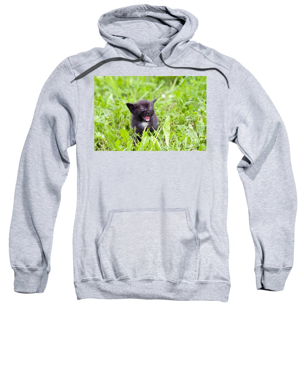 Adorable Sweatshirt featuring the photograph Angry Kitten by Michal Boubin