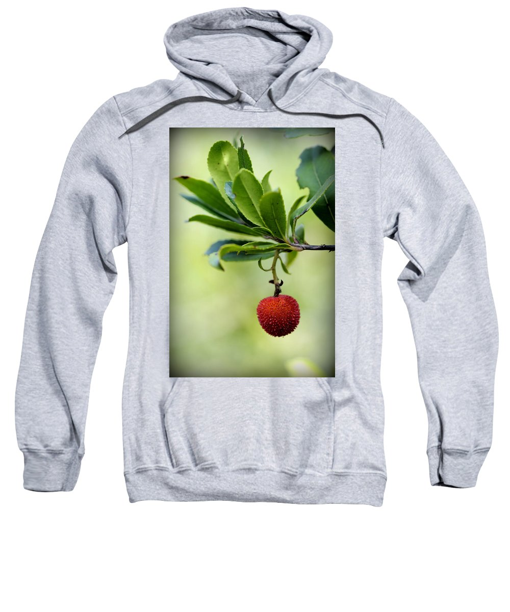 Up Sweatshirt featuring the photograph Autumn Fruits In Red by Pedro Cardona Llambias