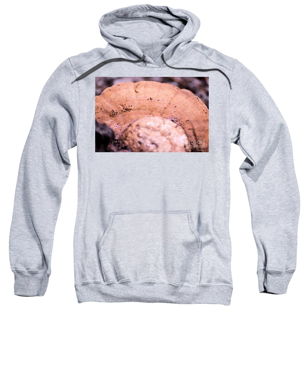 Autumn Sweatshirt featuring the photograph Autumn's Abstract Mushroom by Maria Urso