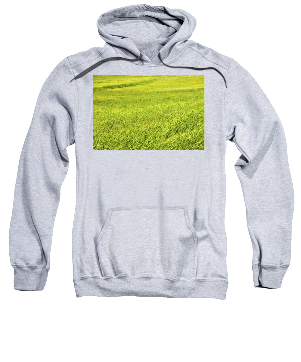 Grass Sweatshirt featuring the photograph Background Of Green Summer Hay Field In Maine by Keith Webber Jr