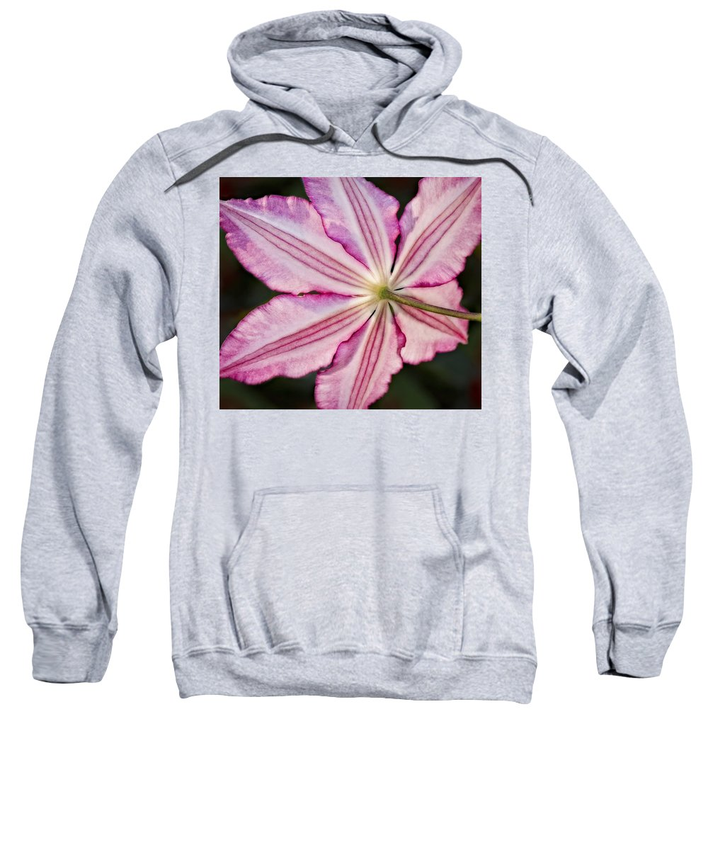 Clematis Sweatshirt featuring the photograph Backlit Clematis by Susan Candelario