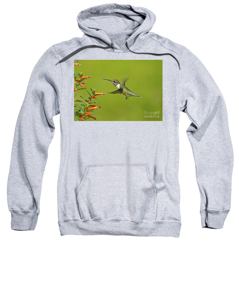 Hummingbird Sweatshirt featuring the photograph Backyard Buddy by TJ Baccari