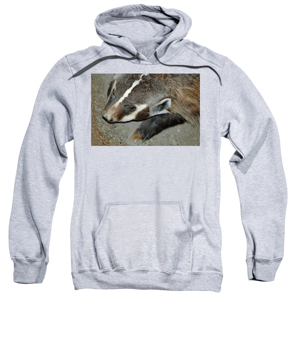 Usa Sweatshirt featuring the photograph Badger On The Loose by LeeAnn McLaneGoetz McLaneGoetzStudioLLCcom