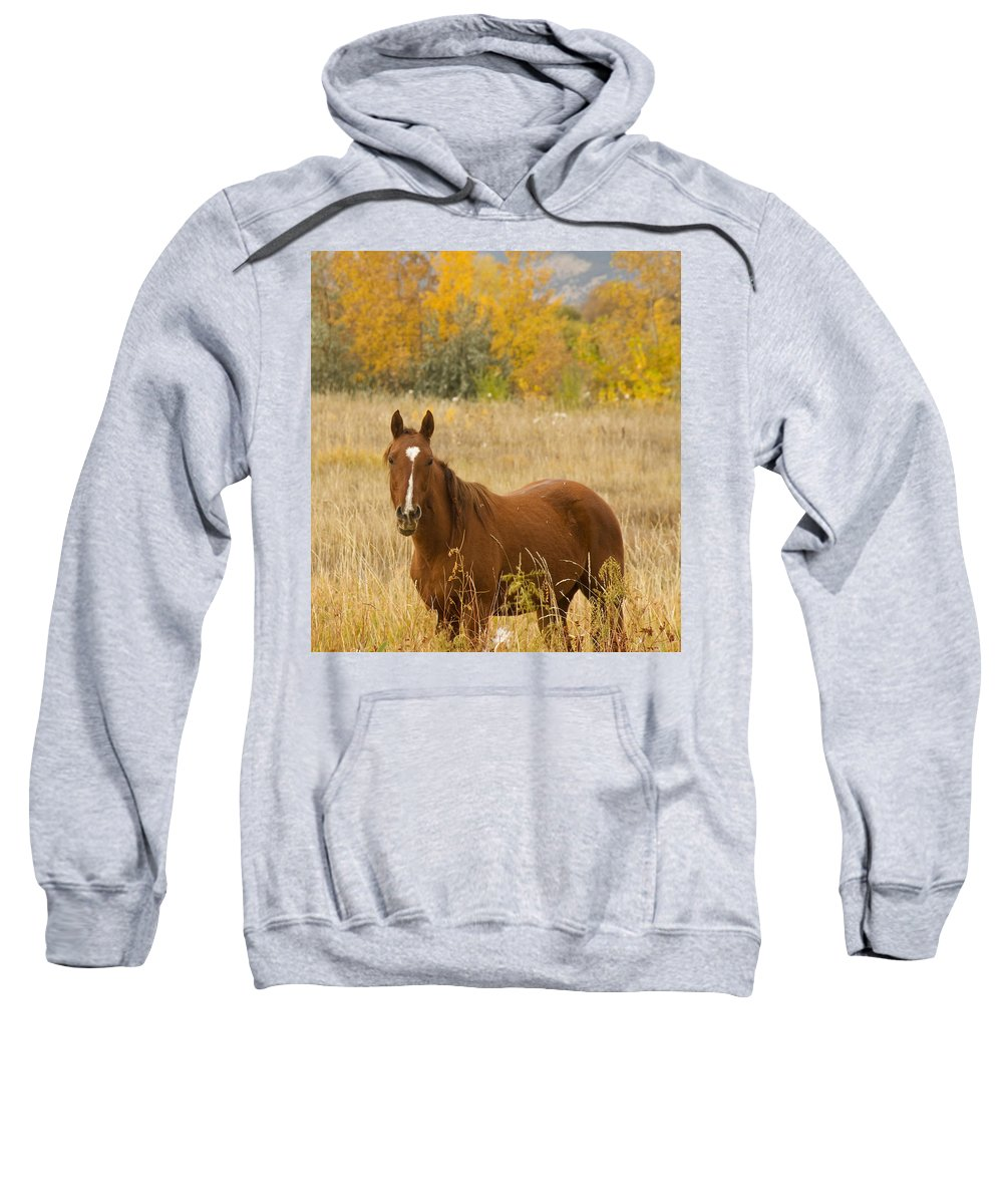 Horse Sweatshirt featuring the photograph Beautiful Chestnut Horse by James BO Insogna