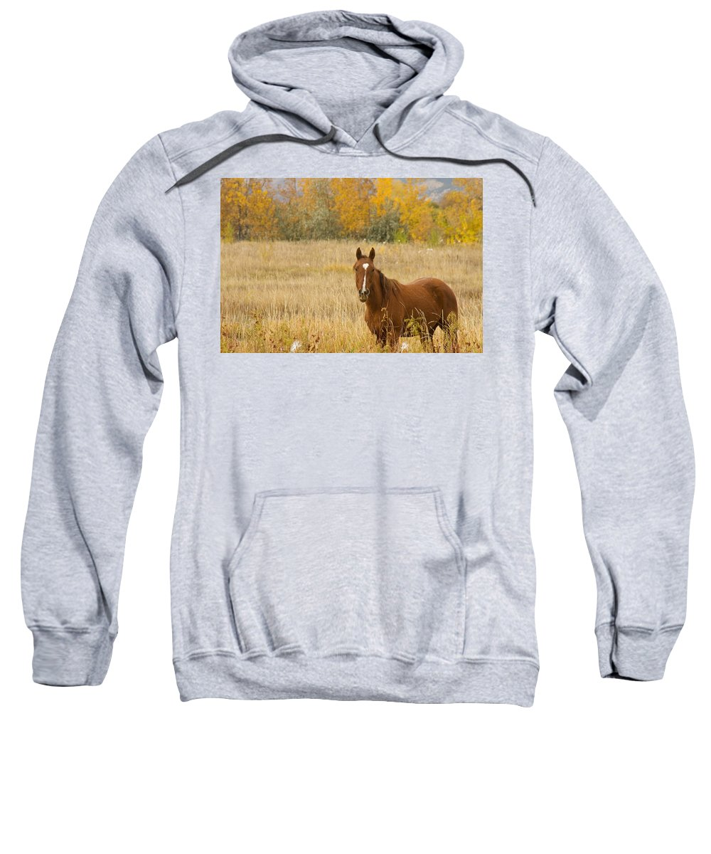Horse Sweatshirt featuring the photograph Beautiful Grazing Horse by James BO Insogna