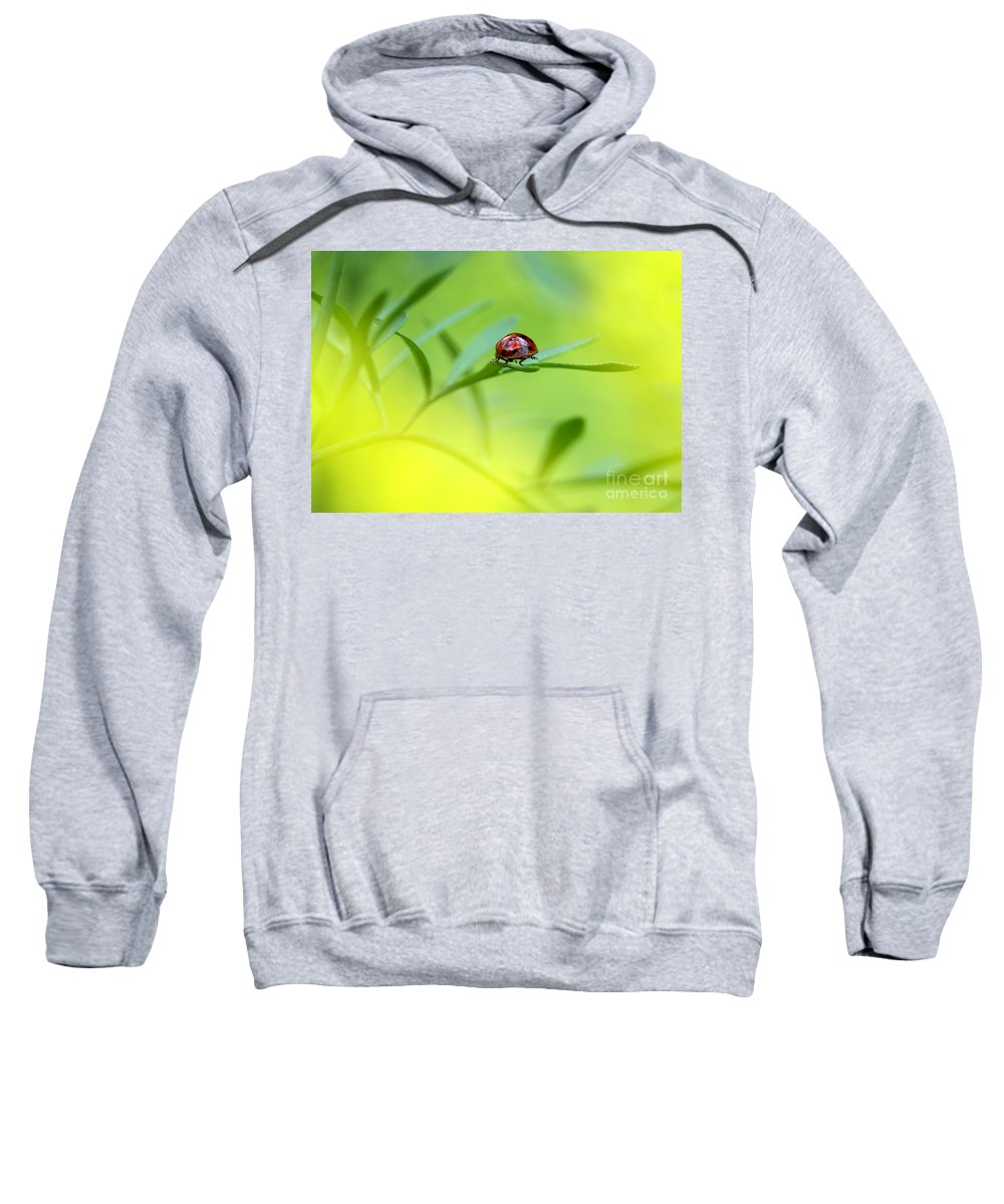 Ladybug Sweatshirt featuring the photograph Beetle Butt by Sharon Talson
