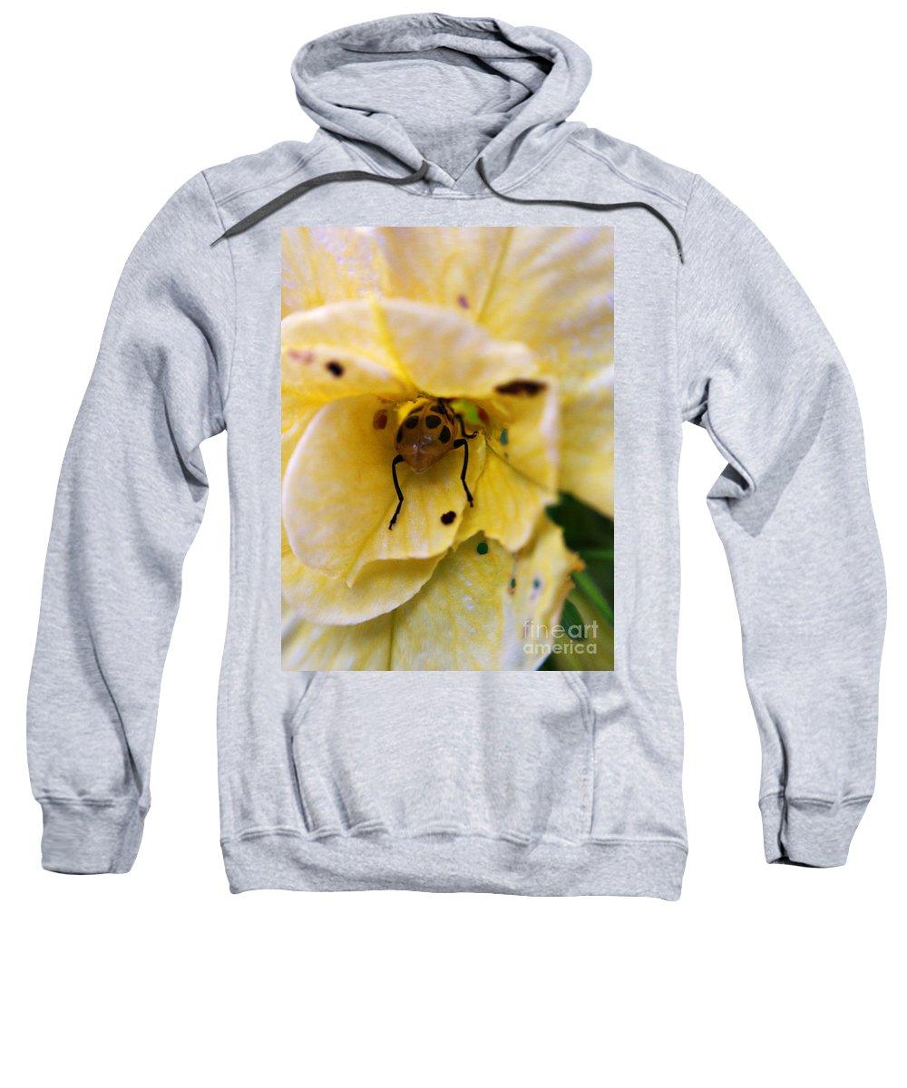 Beetle Sweatshirt featuring the photograph Beetle In Yellow Flower by Matt Zerbe