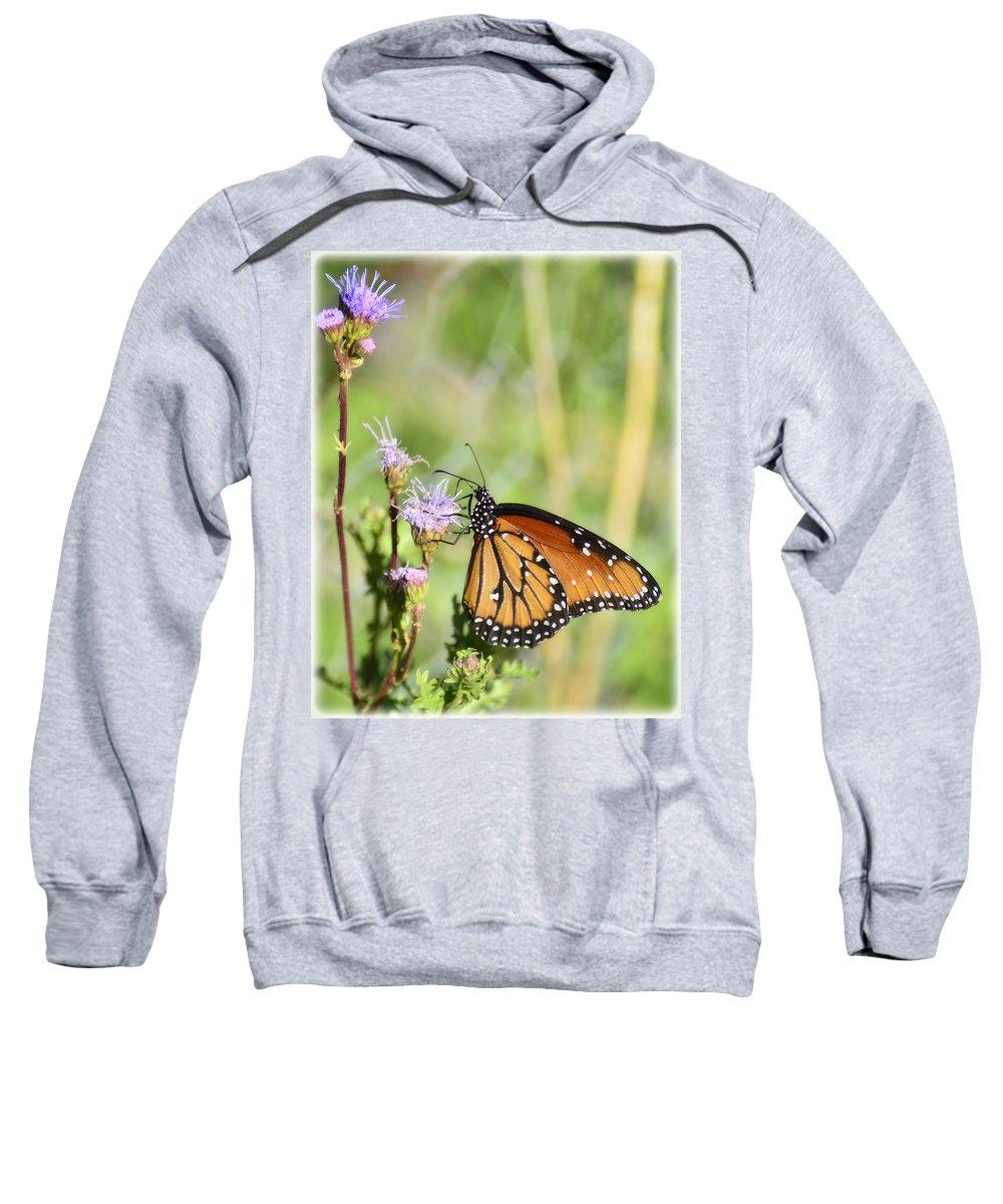 Queen Butterfly Sweatshirt featuring the photograph Befitting A Queen by Saija Lehtonen