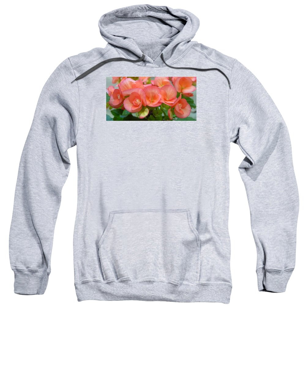 Begonias Sweatshirt featuring the photograph Begonias by Carla Parris
