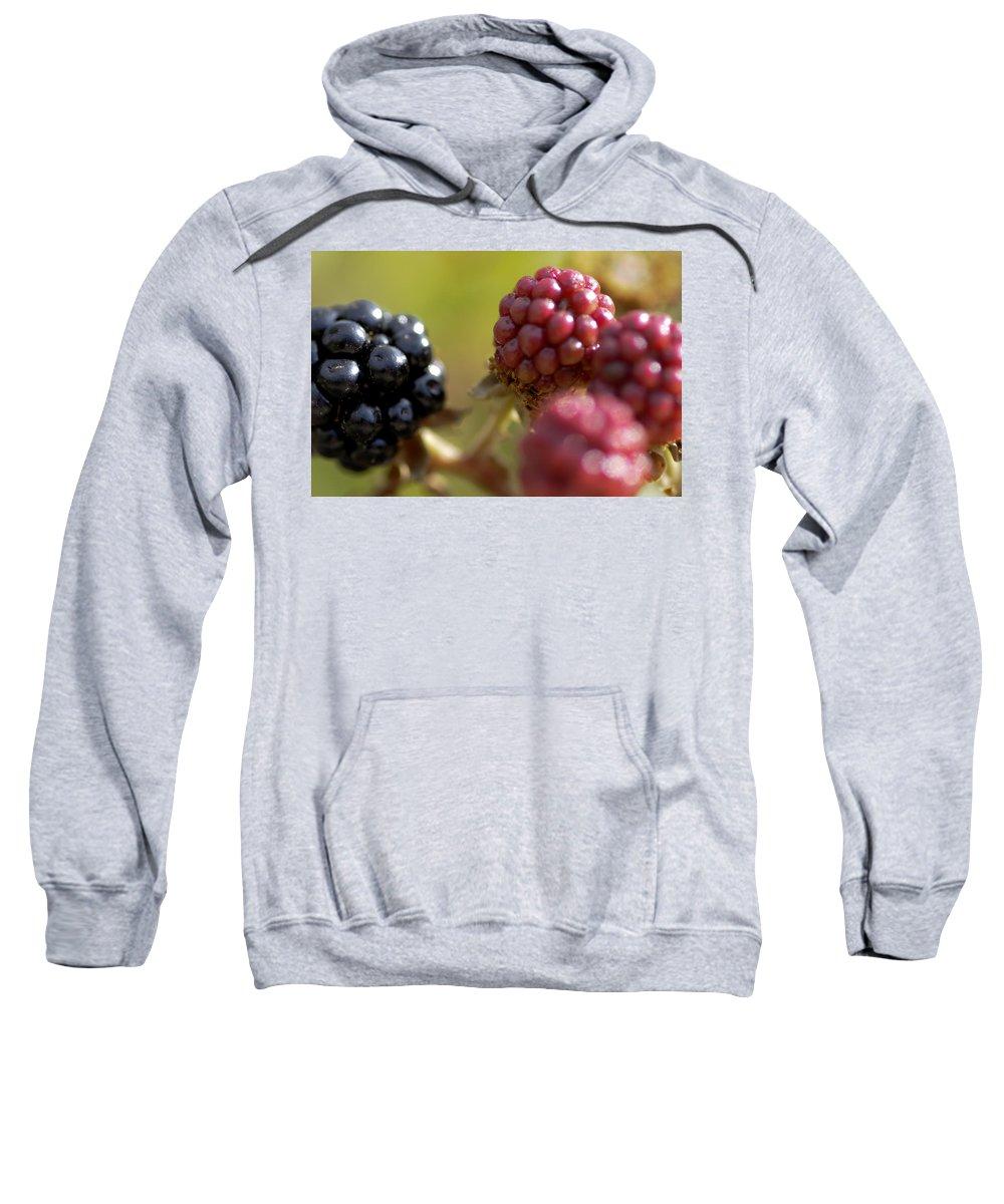 Berries Sweatshirt featuring the photograph Berries by Pedro Cardona Llambias