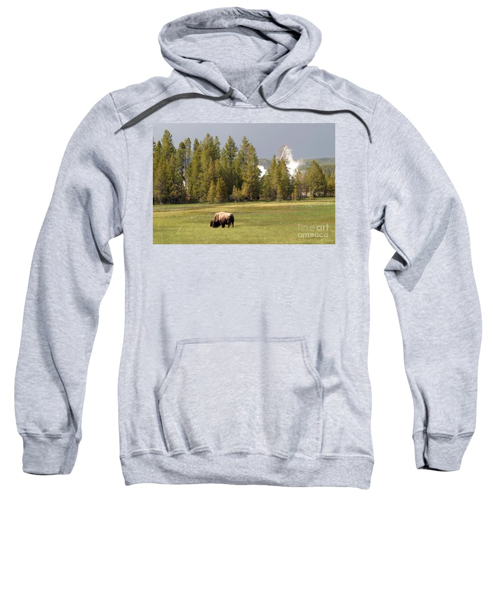 Bison Sweatshirt featuring the photograph Bison In Yellowstone by Living Color Photography Lorraine Lynch