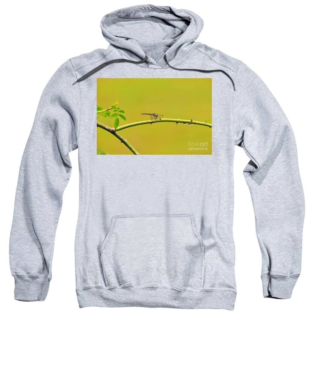Dragonfly Sweatshirt featuring the photograph Blue Dasher Female by Al Powell Photography USA