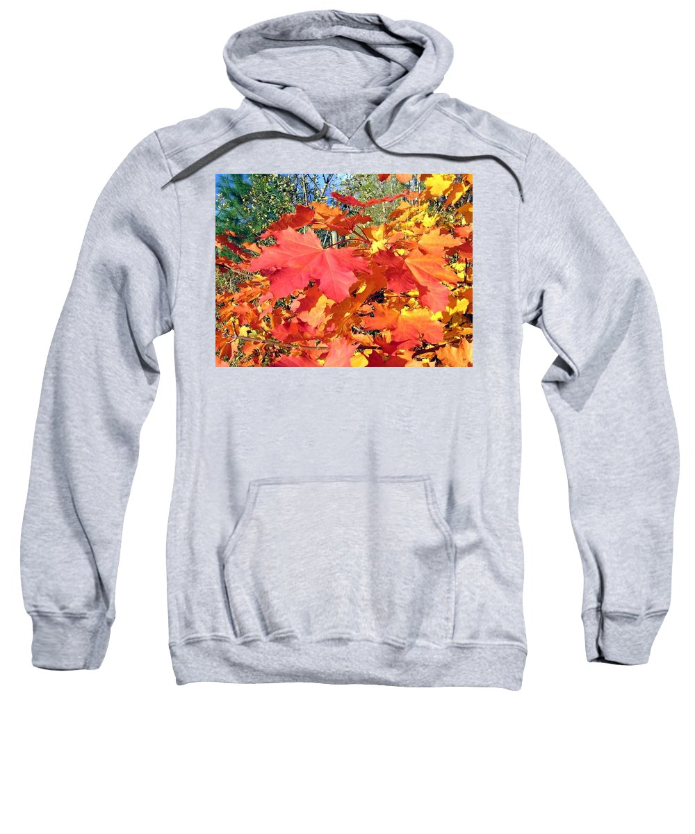 Autumn Sweatshirt featuring the photograph Bold And Bedazzling by Will Borden