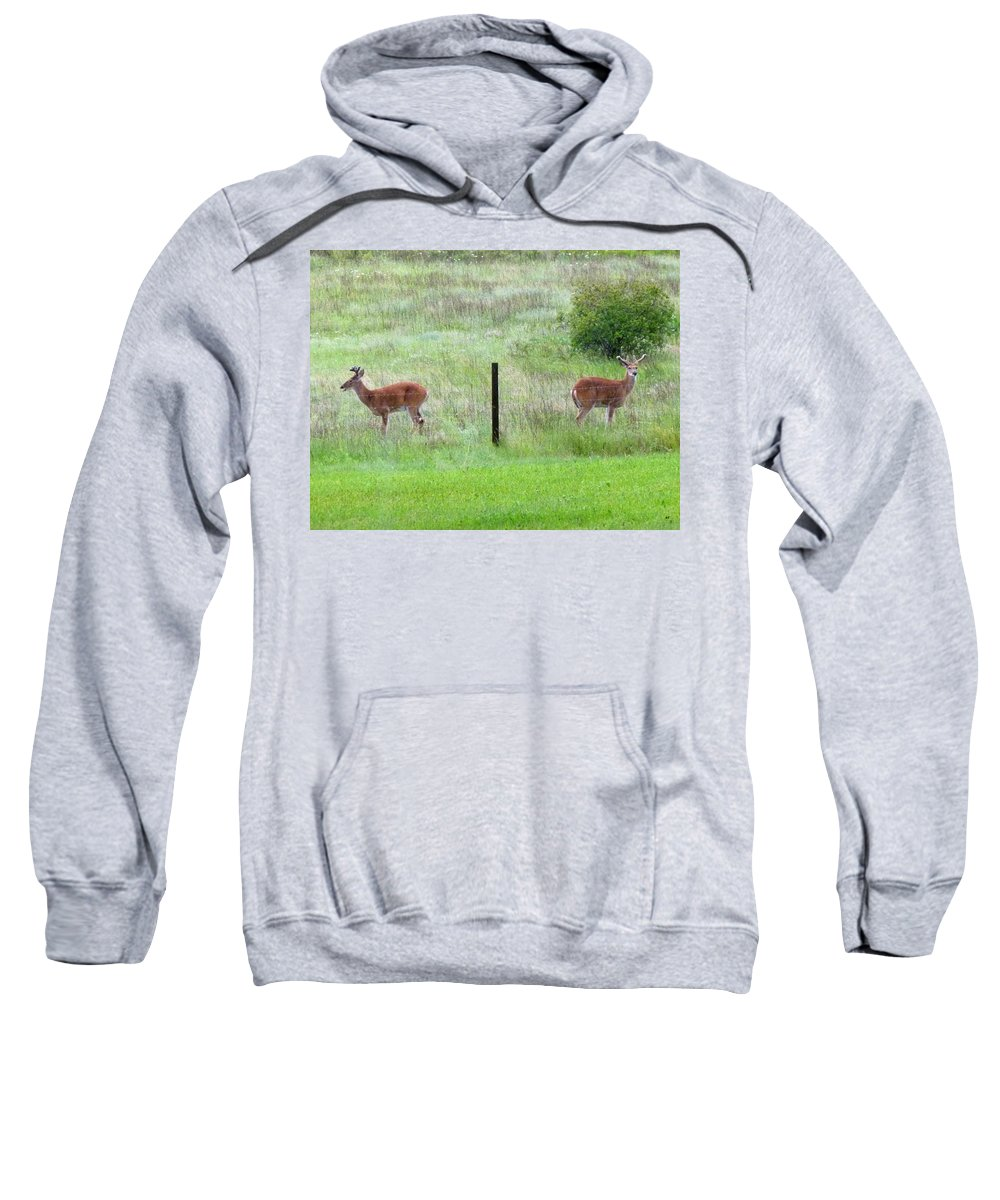 Deer Sweatshirt featuring the photograph Bookend Twin Bucks by Will Borden