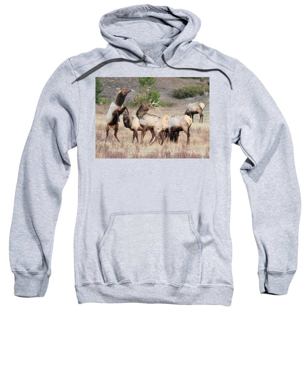 Elk Sweatshirt featuring the photograph Boxing Match by Shane Bechler