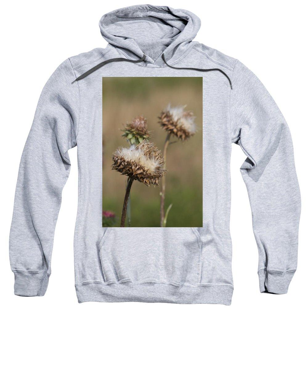 Carduus Nutans Sweatshirt featuring the photograph Bristle Thistle - Carduus Nutans by Kathy Clark