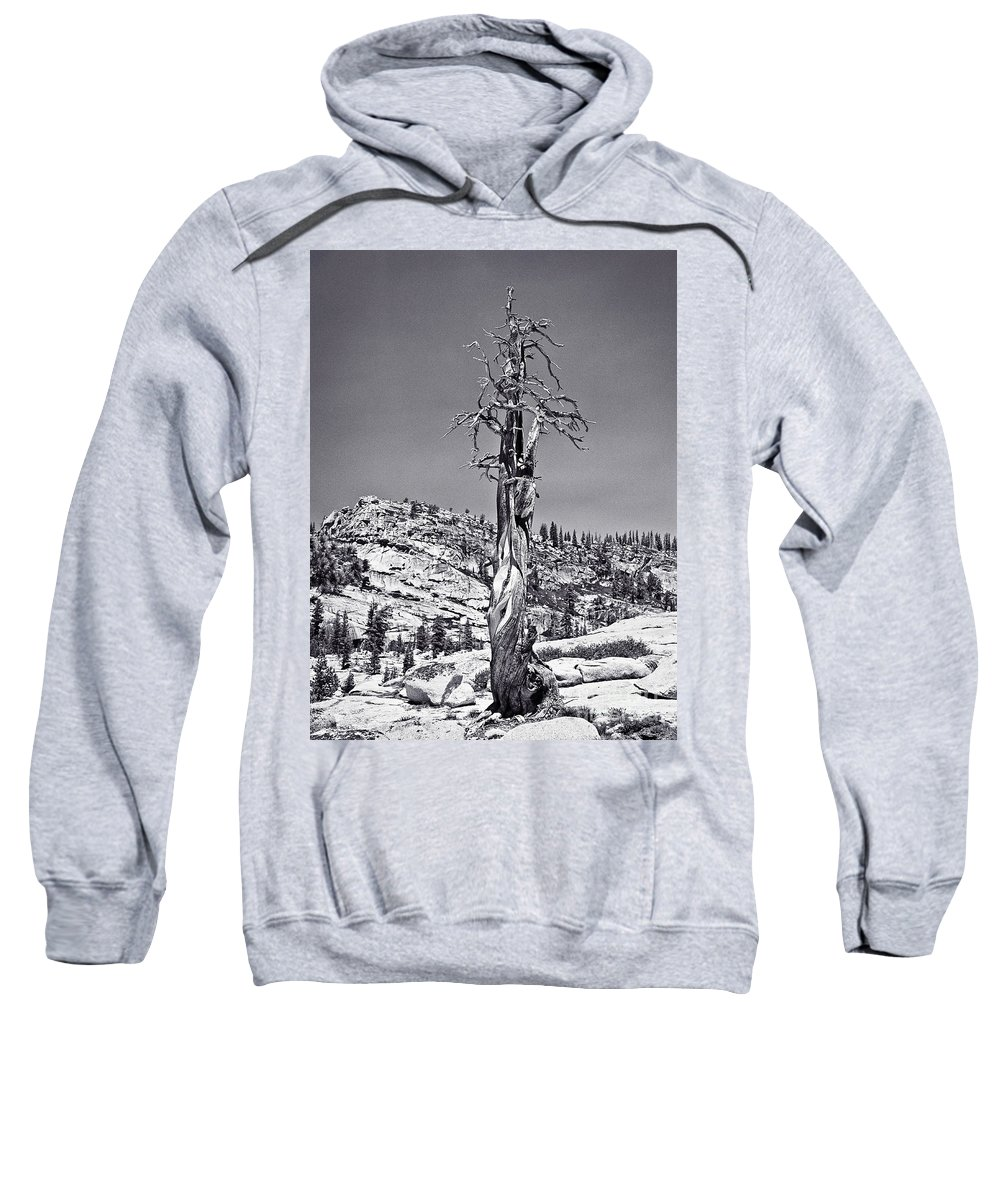 Fine Art Photography Sweatshirt featuring the photograph Bristlecone Pine - High Sierra by John Waclo