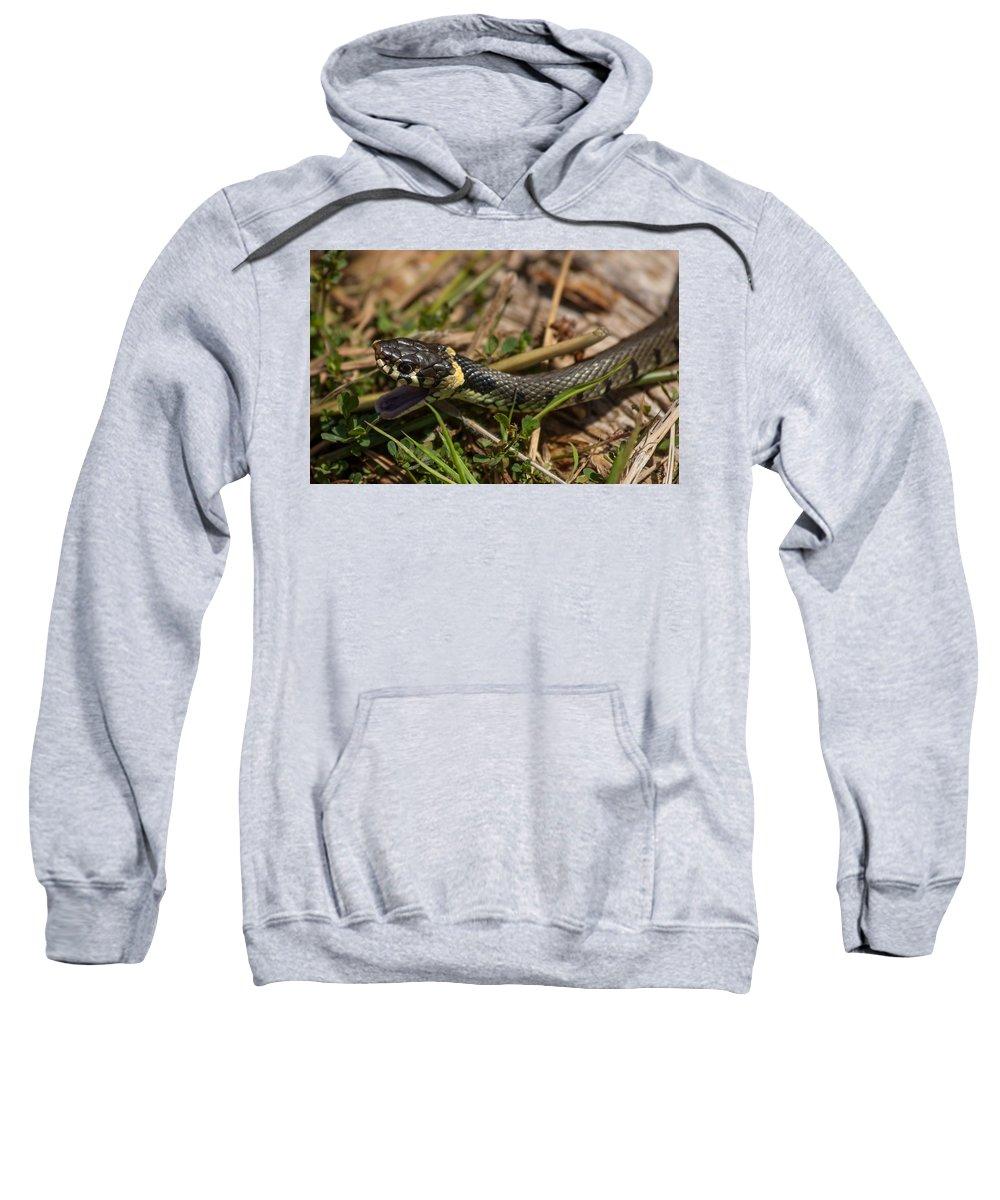 British Grass Snake Sweatshirt featuring the photograph British Grass Snake by Dawn OConnor