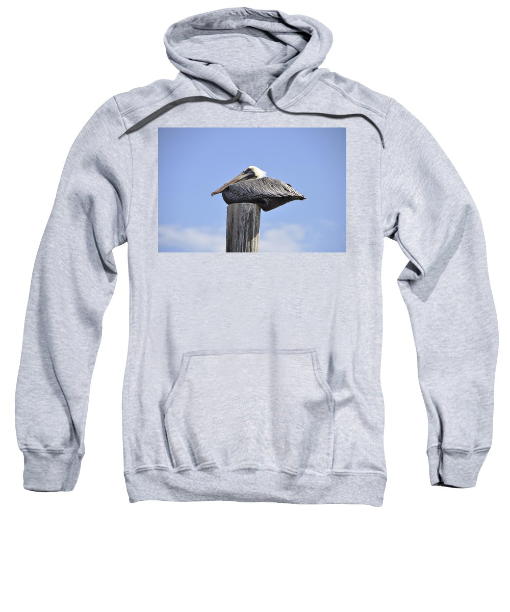 Bird Sweatshirt featuring the photograph Brown Pelican 2 by Rich Bodane