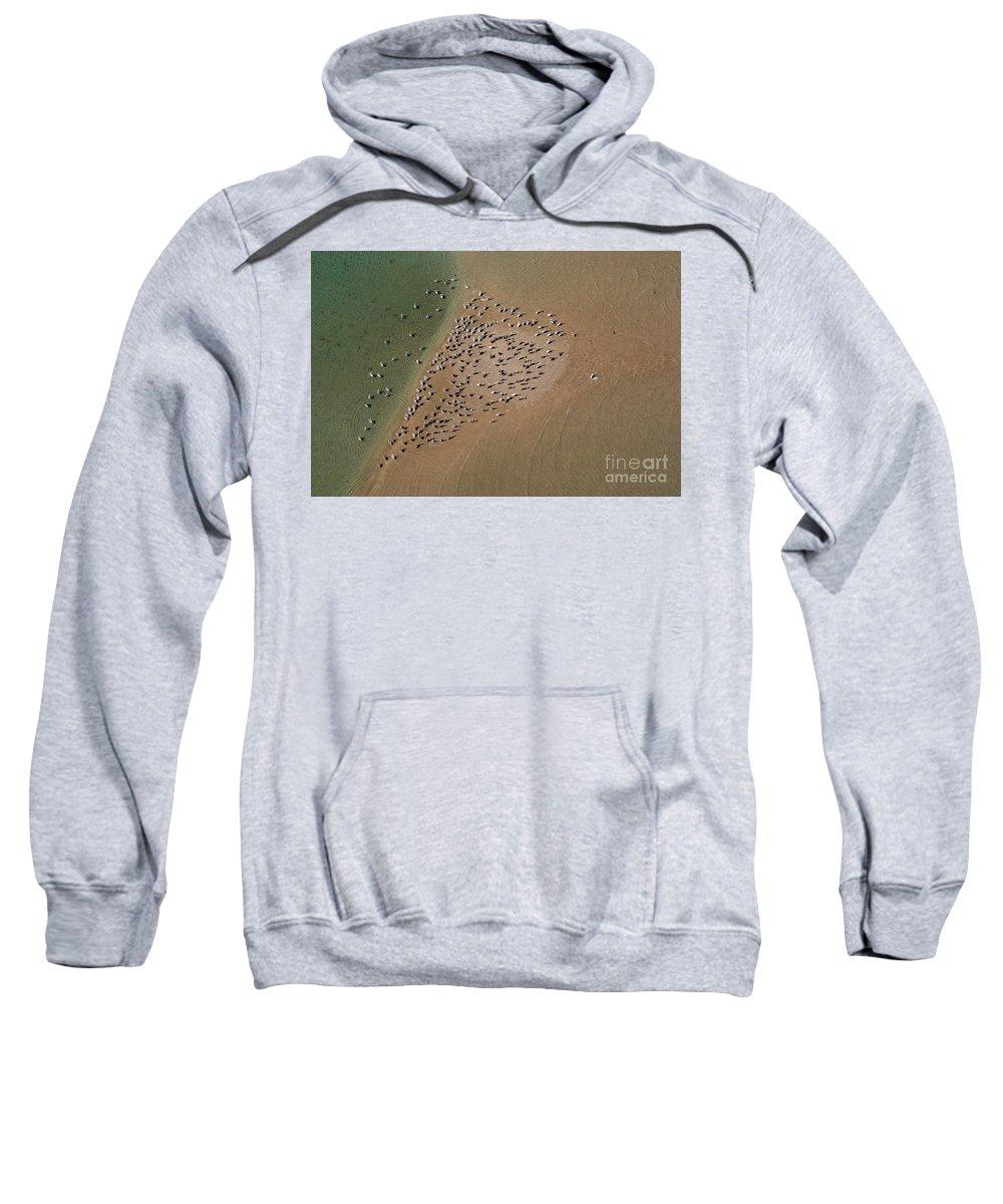 Animal Sweatshirt featuring the photograph Brown Pelican Flock by Raul Gonzalez Perez