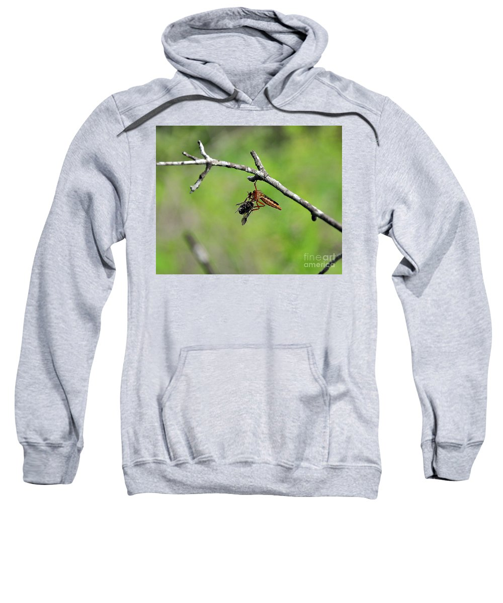 Insect Sweatshirt featuring the photograph Bug Eat Bug by Al Powell Photography USA