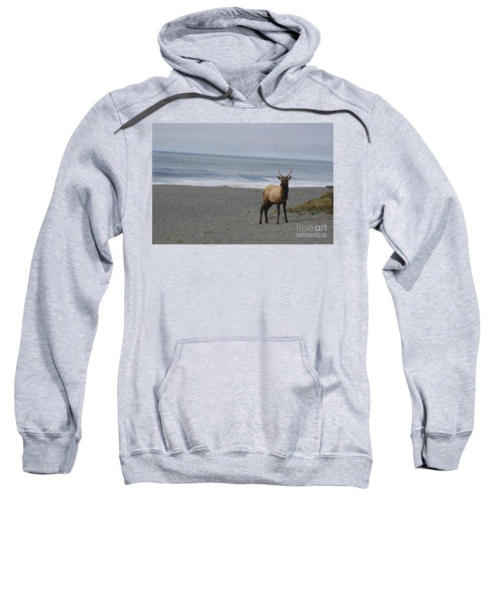 Bull Sweatshirt featuring the photograph Bull Elk On Calfornia Coast by Jim And Emily Bush