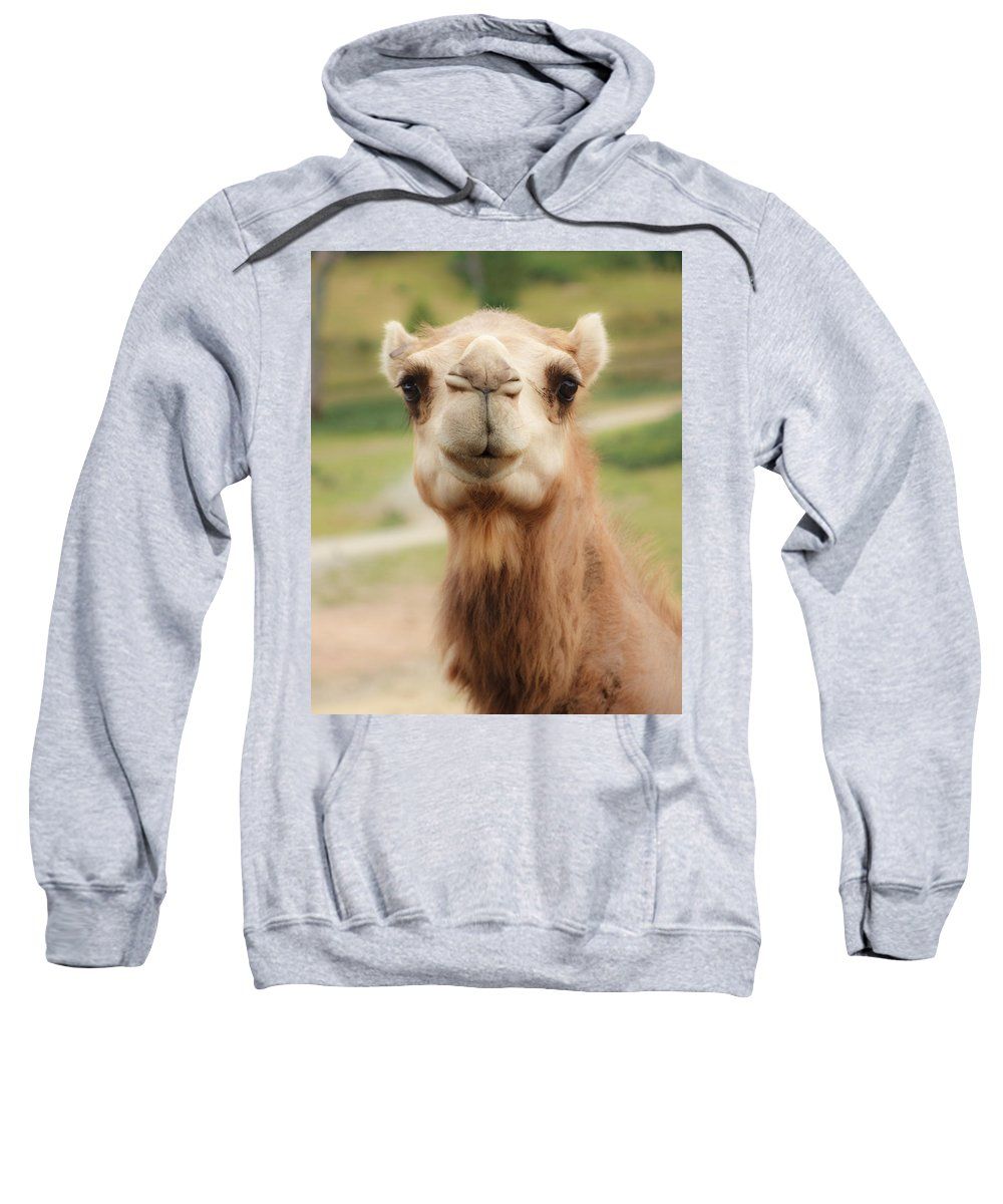 Camel Sweatshirt featuring the photograph Camel Cameo by Michael Clubb