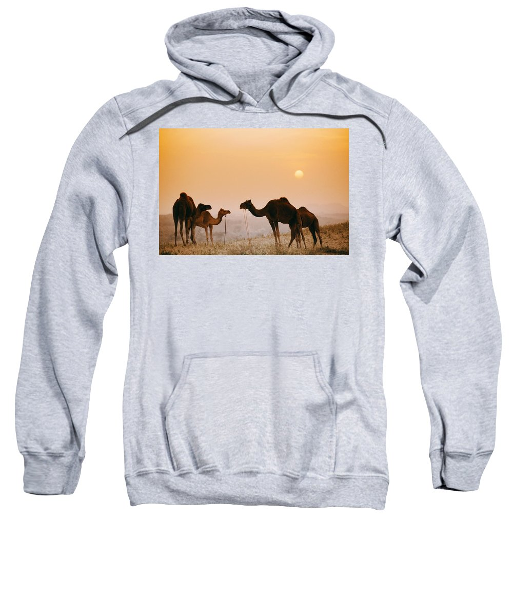 Animals Sweatshirt featuring the photograph Camels At The Pushkar Camel Fair, India by Bilderbuch