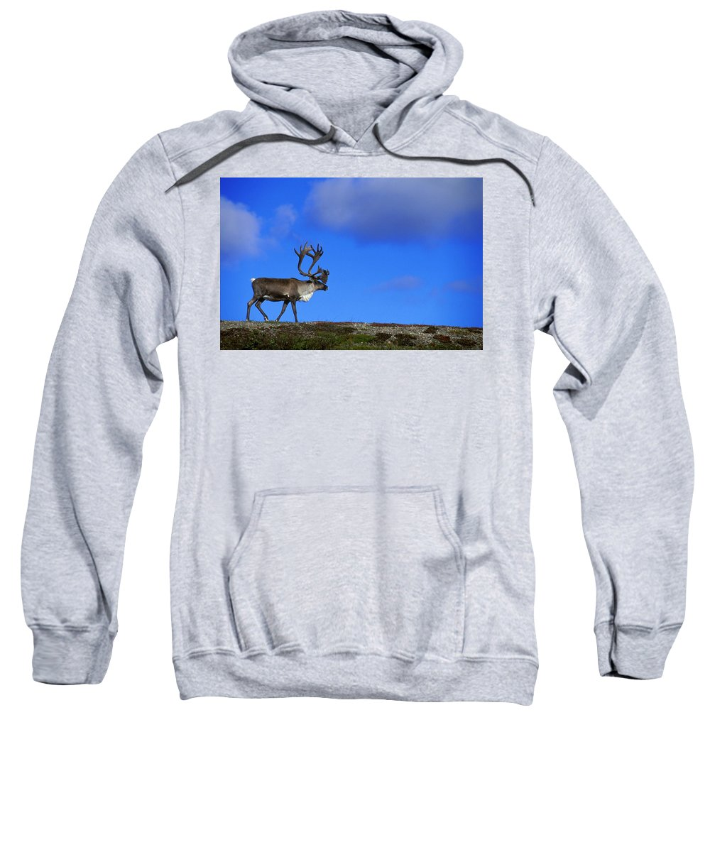 Antlers Sweatshirt featuring the photograph Caribou Walking On Hill Crest by Jason Witherspoon