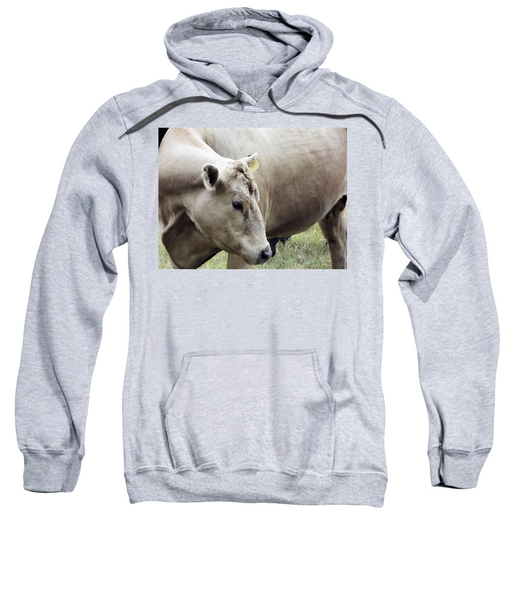 Cow Sweatshirt featuring the photograph Catch My Good Side by Jennifer Stockman