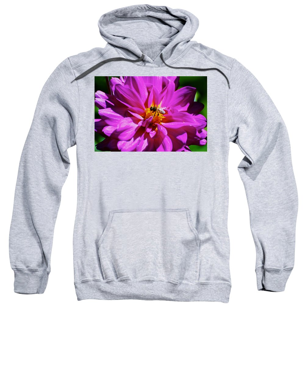 Pink Sweatshirt featuring the photograph Center Of Attention by Eric Tressler