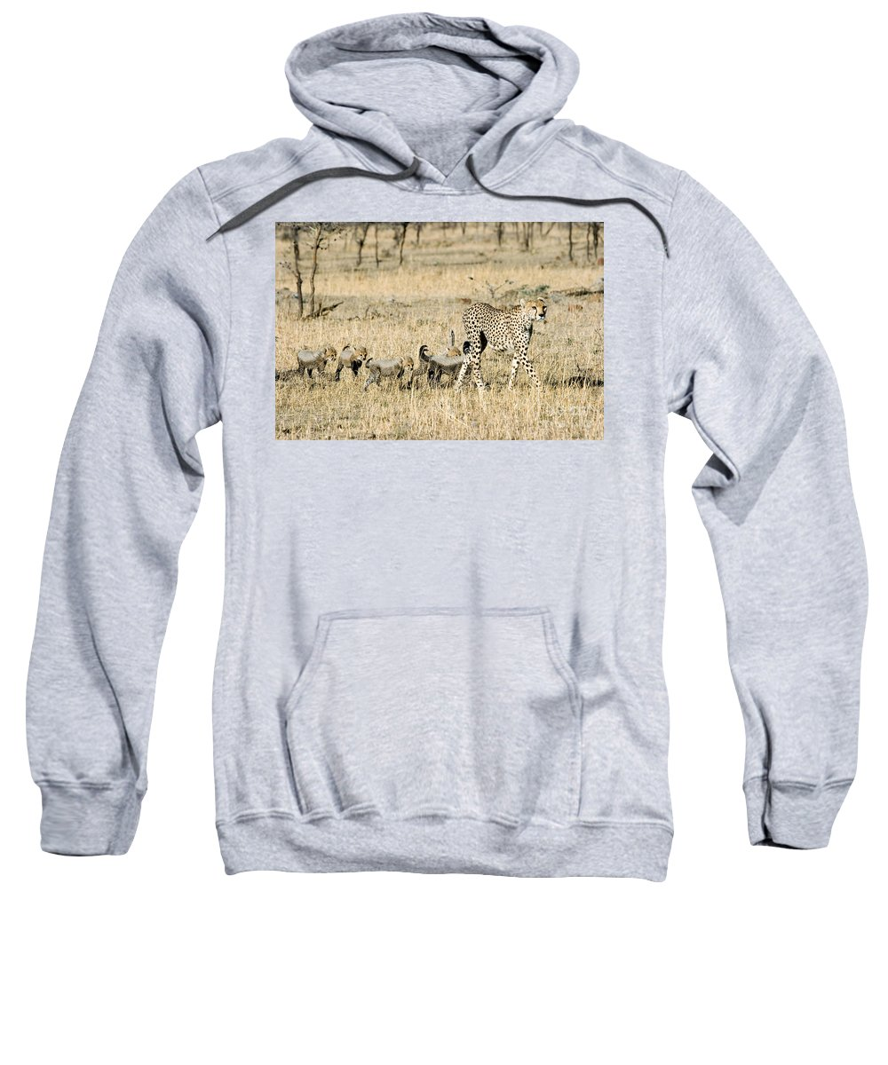 Animal Sweatshirt featuring the photograph Cheetah Mother And Cubs by Gregory G Dimijian MD