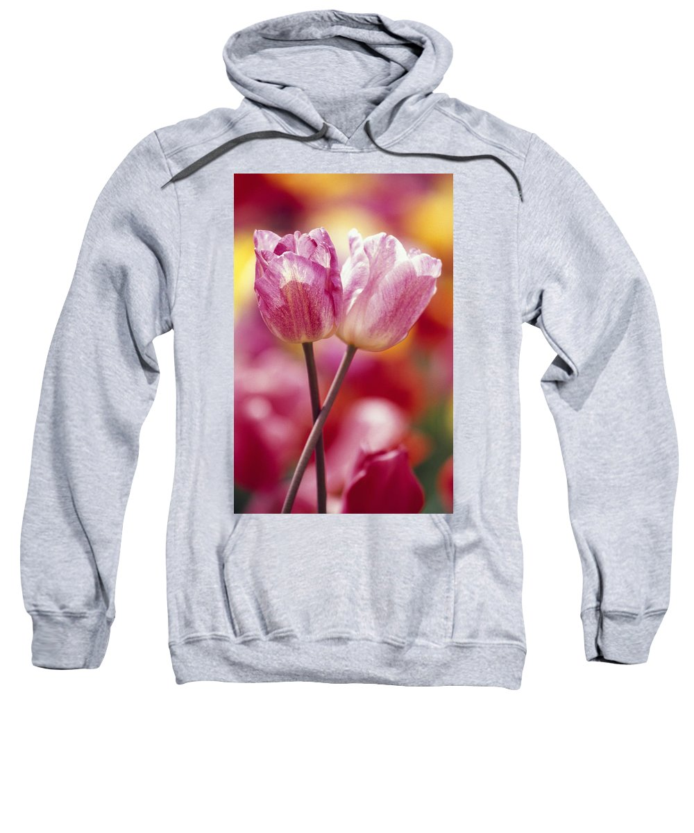 Plant Sweatshirt featuring the photograph Close-up Of Tulips by Natural Selection Craig Tuttle