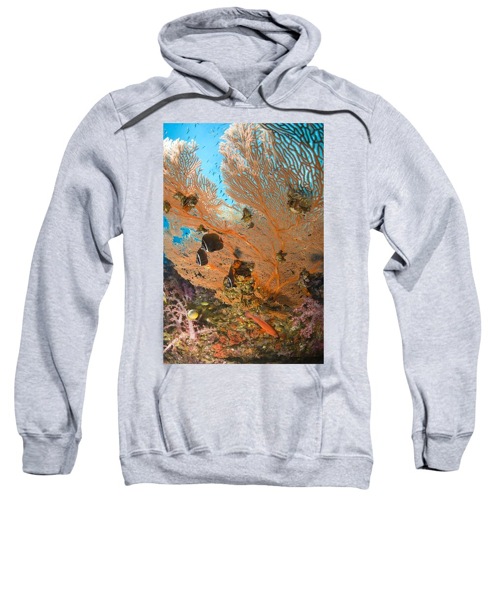 Animal Sweatshirt featuring the photograph Collare Butterflyfish by Stuart Westmorland
