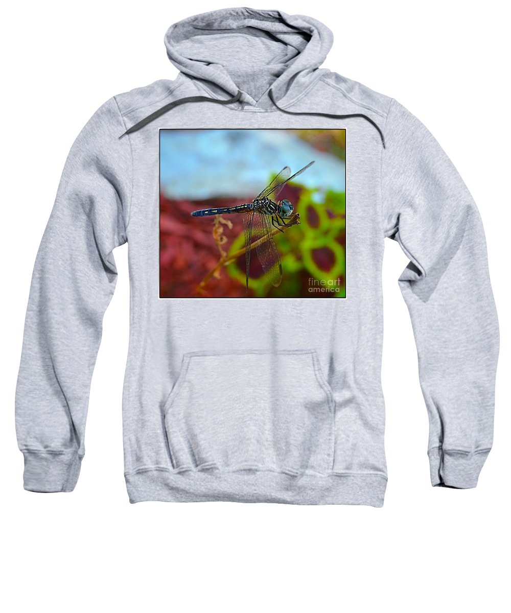 Macro Sweatshirt featuring the photograph Colorful Dragon Fly by Peggy Franz