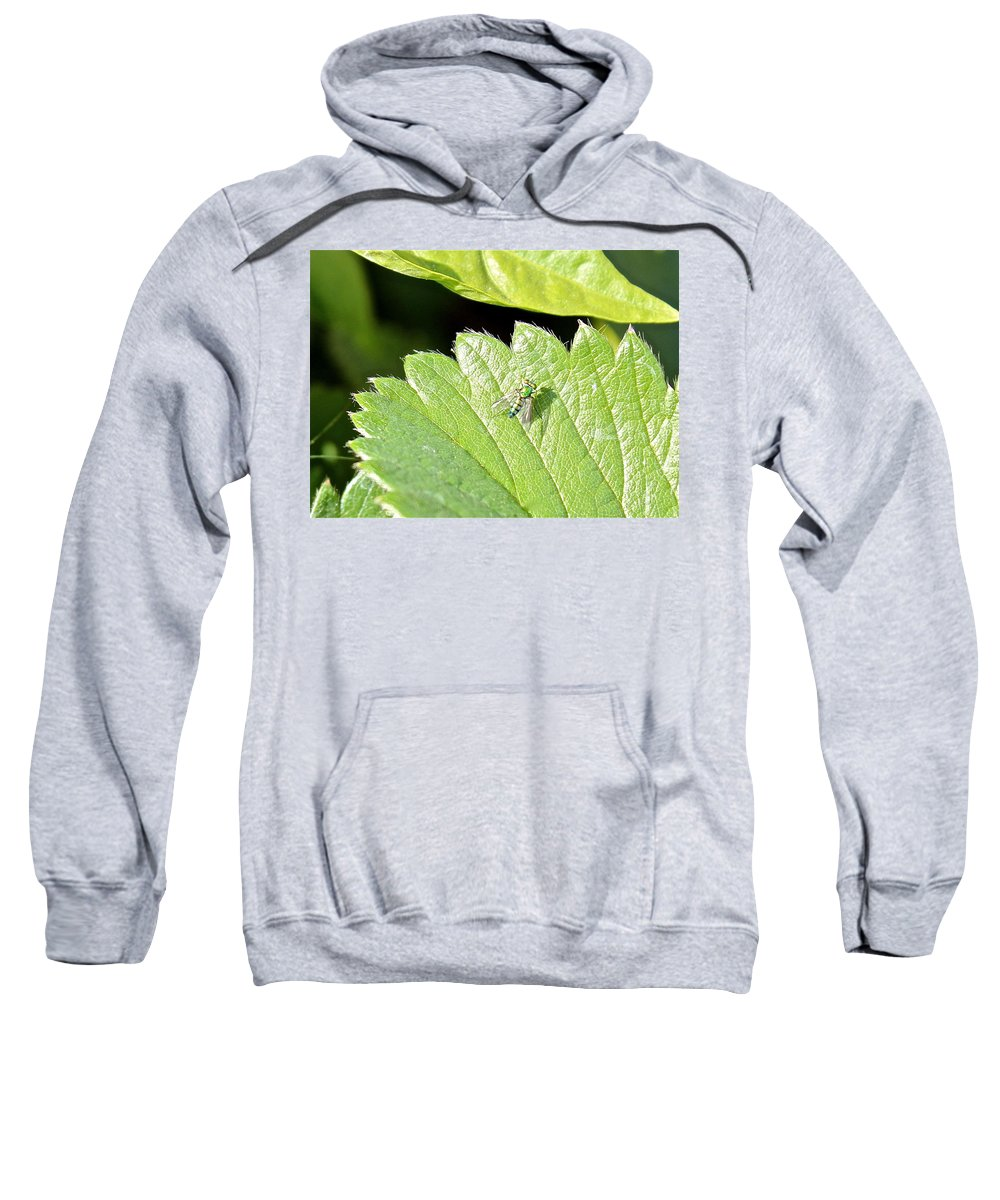Colorful Sweatshirt featuring the photograph Colorful Garden Fly 2 by Kume Bryant