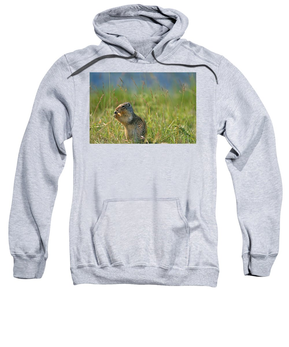 Banff National Park Sweatshirt featuring the photograph Columbia Ground Squirrel Feeding by Mike Grandmailson