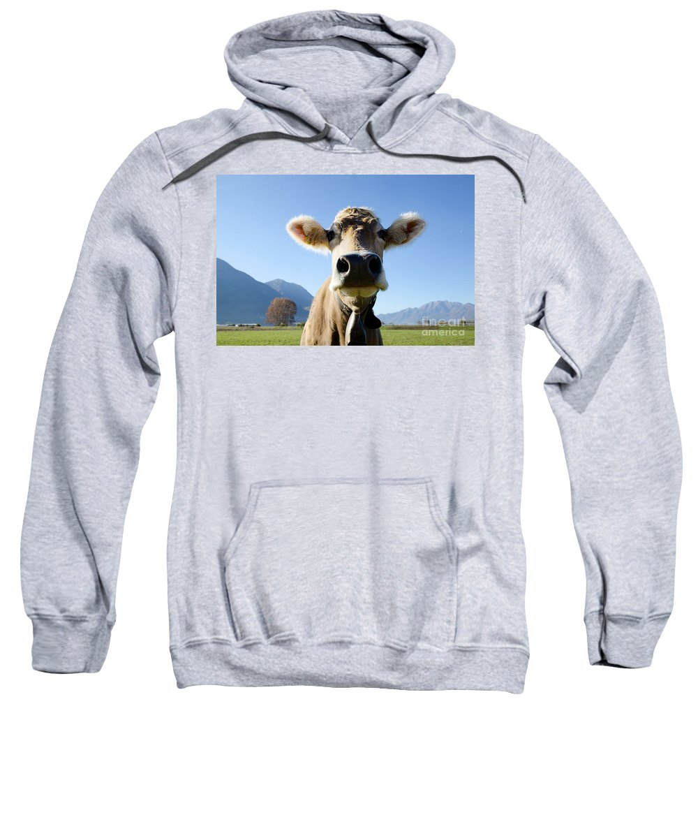 Cow Sweatshirt featuring the photograph Cow With A Bell by Mats Silvan