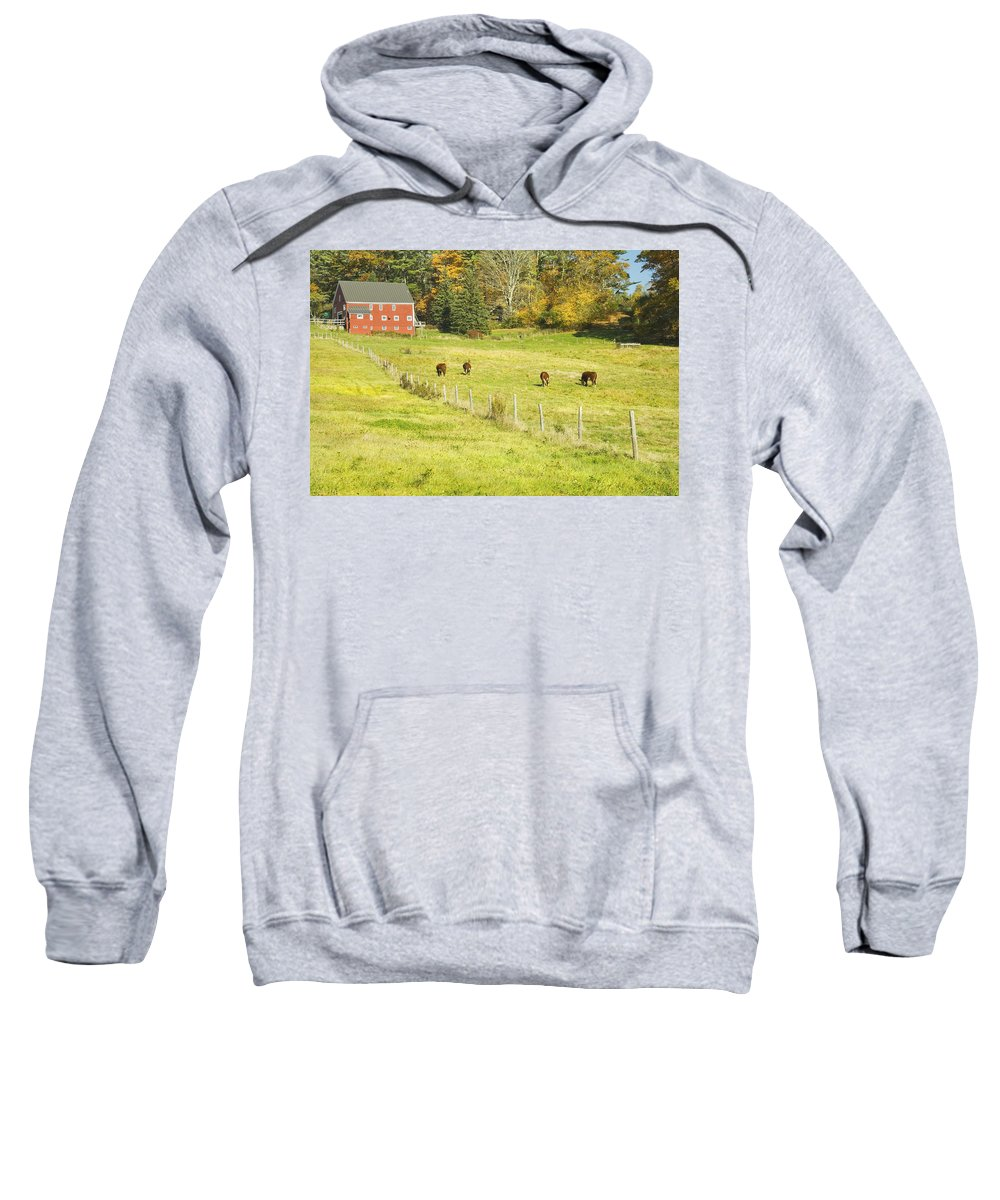 Cow Sweatshirt featuring the photograph Cows Grazing On Grass In Farm Field Fall Maine by Keith Webber Jr