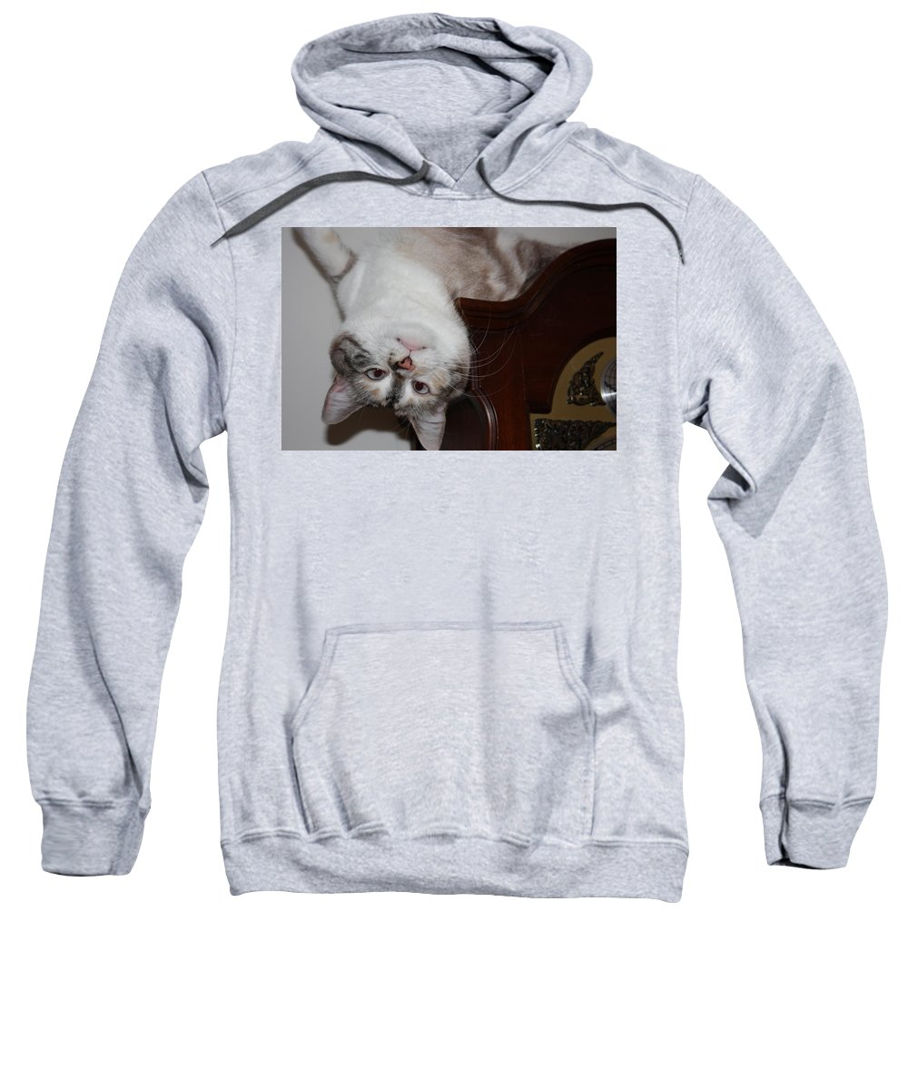 My Cat Sweatshirt featuring the photograph Crazy Cat by Kristin Elmquist