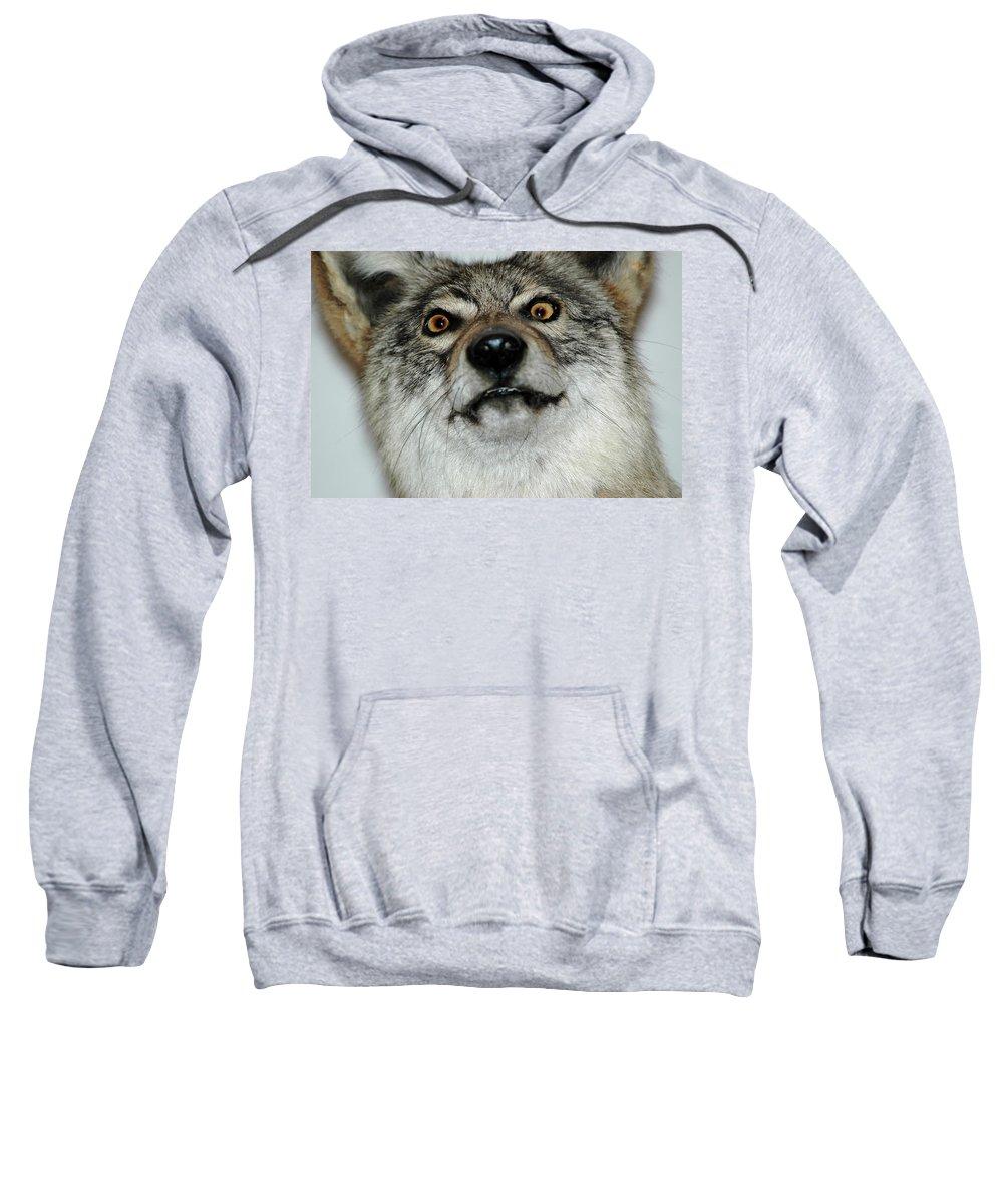 Usa Sweatshirt featuring the photograph Crazy Like A Fox by LeeAnn McLaneGoetz McLaneGoetzStudioLLCcom