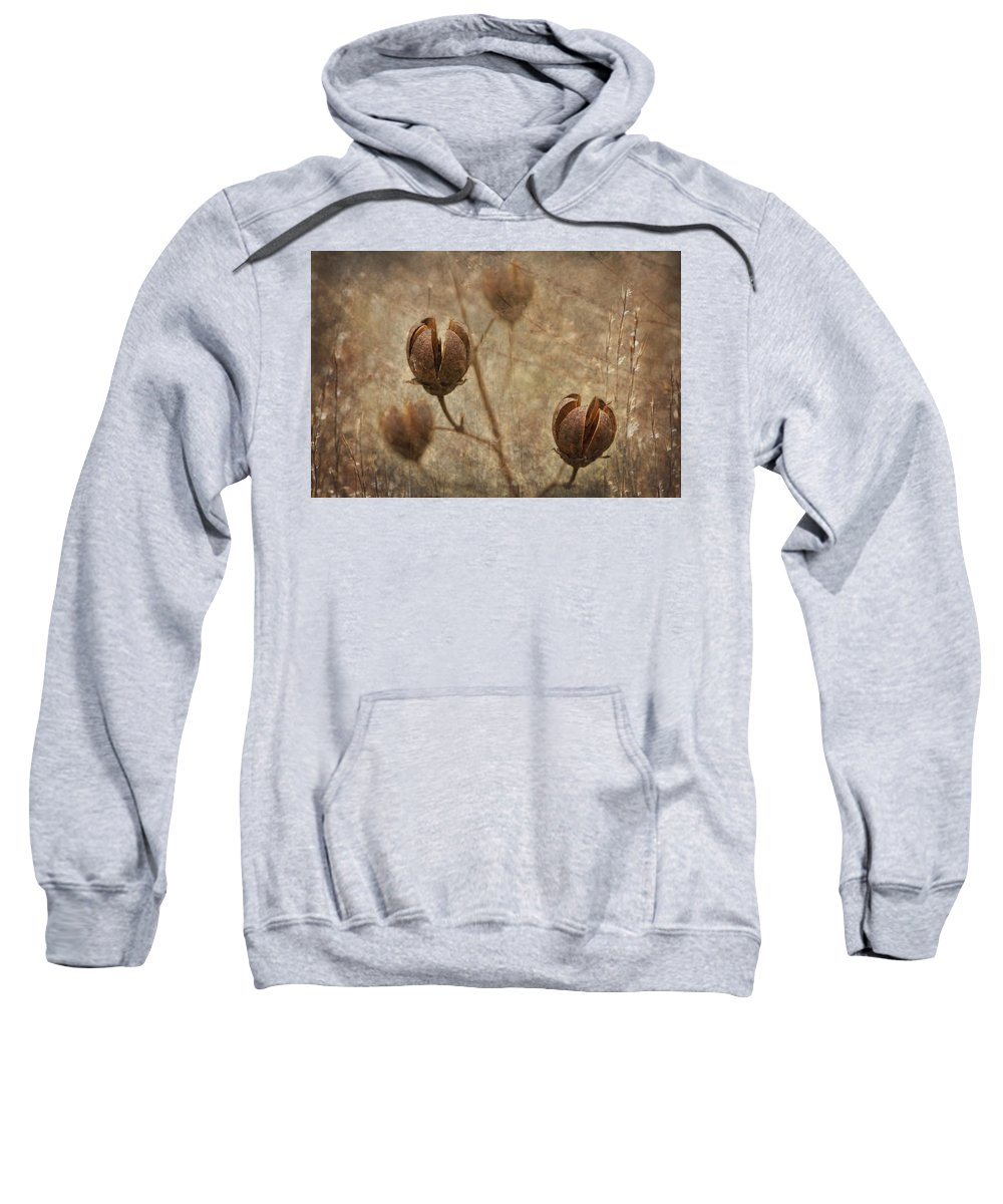 Crepe Sweatshirt featuring the photograph Crepe Myrtle Seed Pods With Grunge And Textures by Kathy Clark