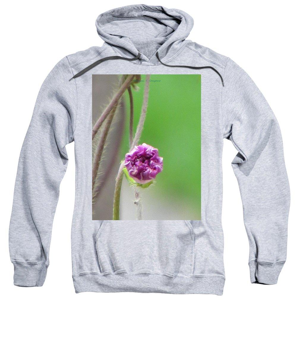 Art Is Everywhere Sweatshirt featuring the photograph Crumpled Yet Beautiful by Sonali Gangane