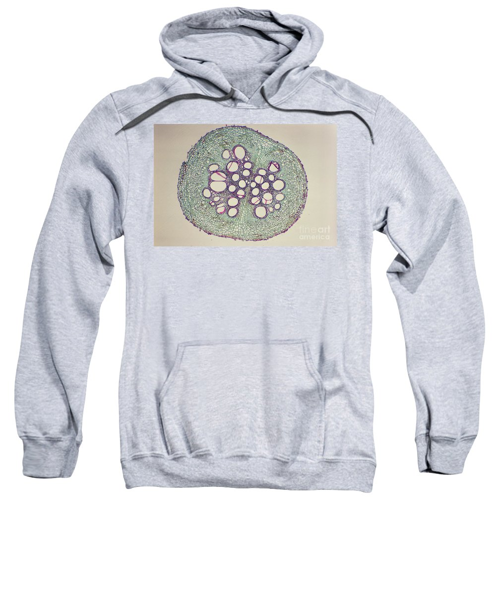 Cucumber Root Sweatshirt featuring the photograph Cucumber Root Section by M. I. Walker