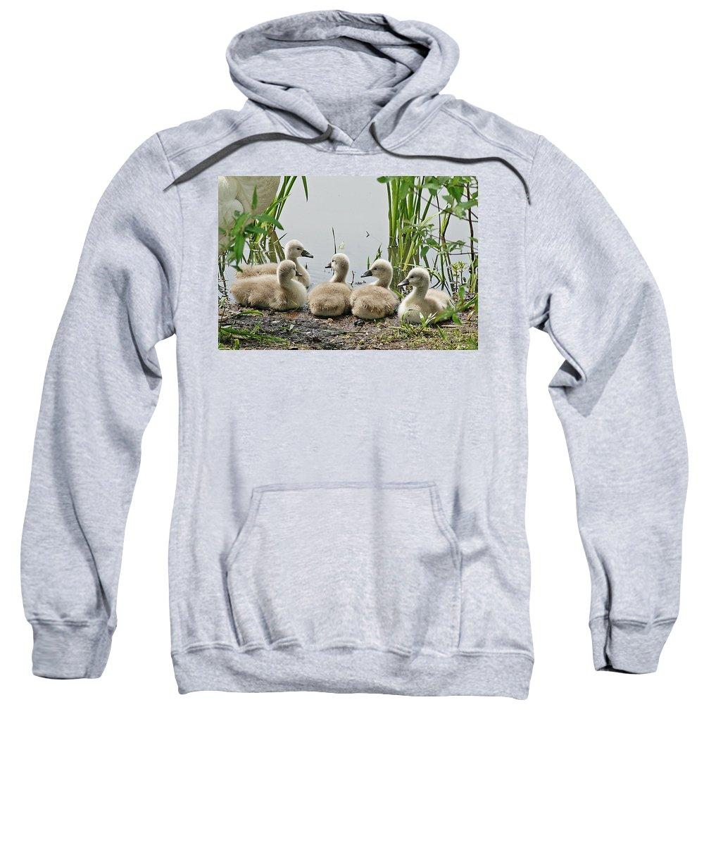 Horn Pond Sweatshirt featuring the photograph Cygnets I by Joe Faherty