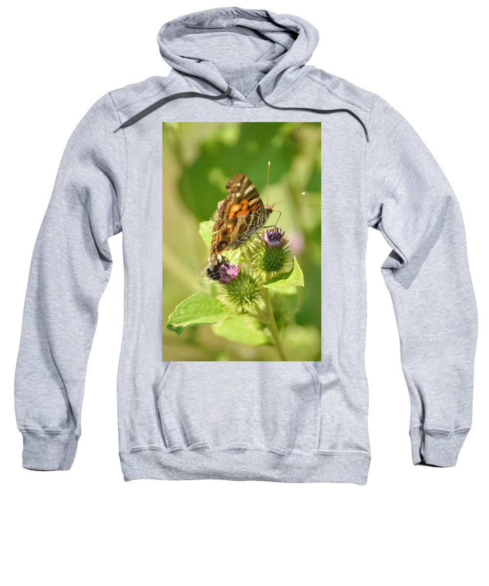 Butterfly Sweatshirt featuring the photograph Dinner Date by Bill Cannon