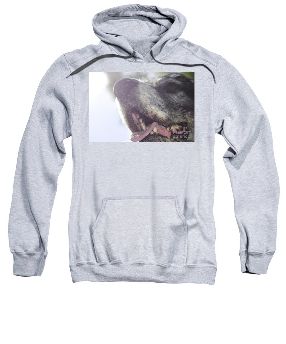 Dog Sweatshirt featuring the photograph Dog In Backlight by Mats Silvan