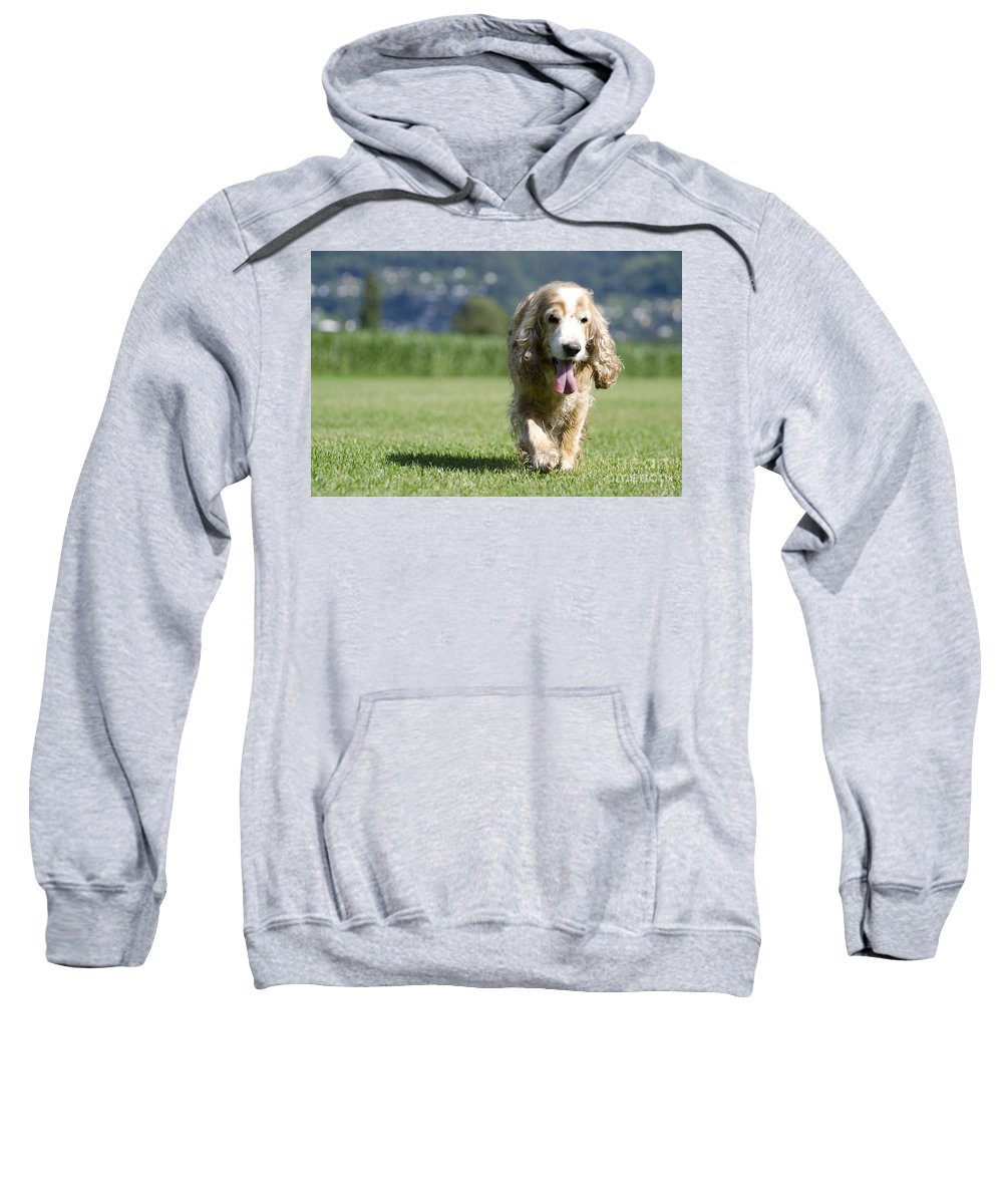Dog Sweatshirt featuring the photograph Dog Walking On The Green Grass by Mats Silvan