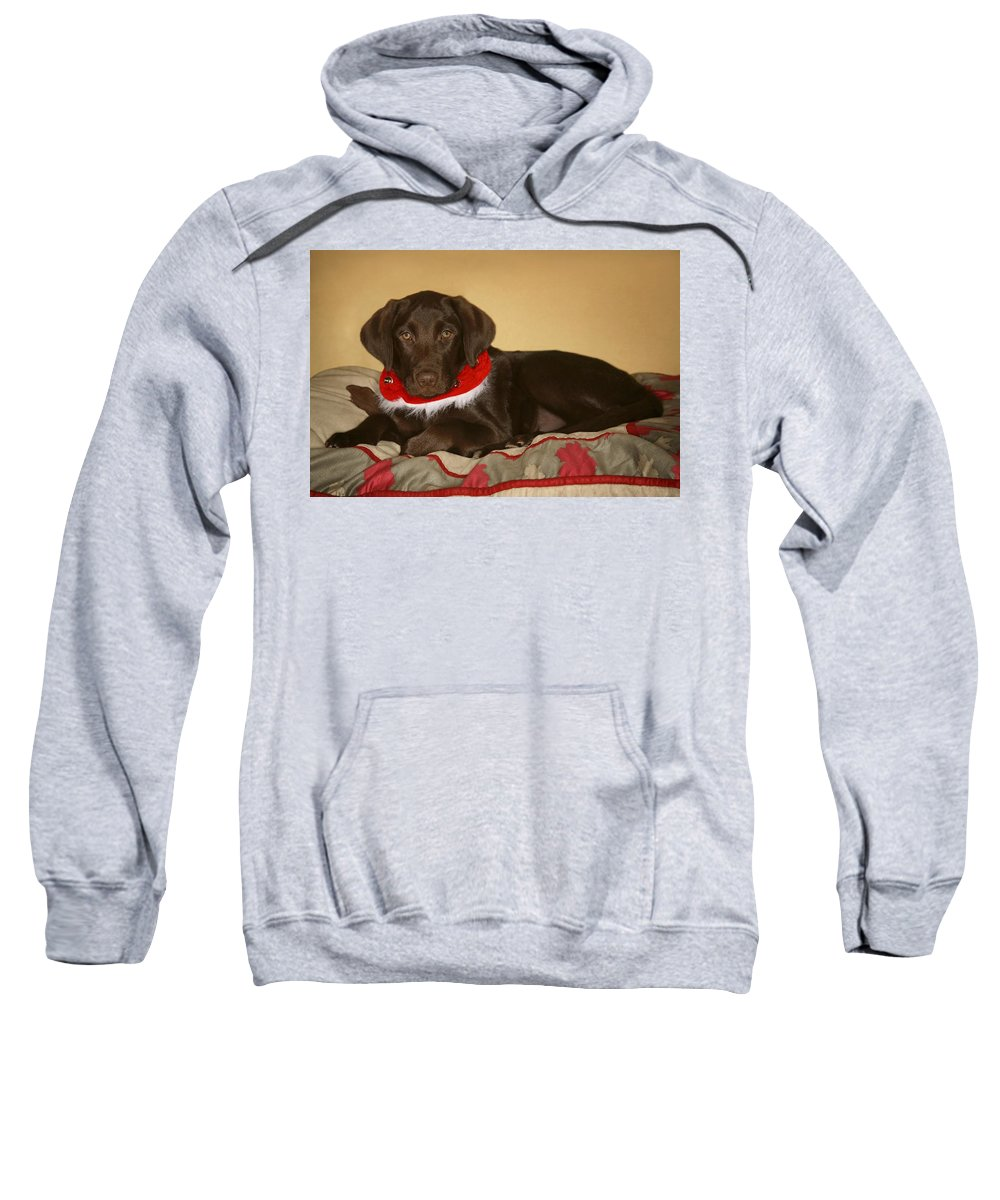 Animals Sweatshirt featuring the photograph Dog With Christmas Collar by Leah Hammond